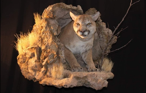 Southwest Wildlife